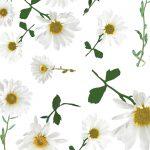ivana helsinki wildflowers