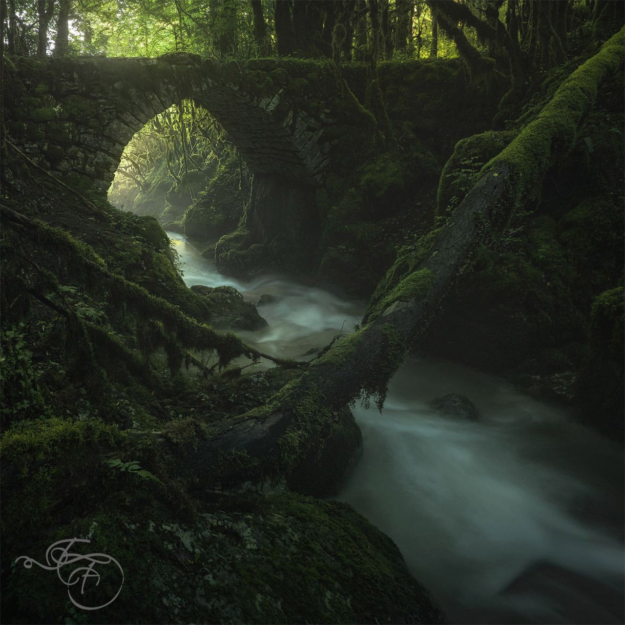 enrico fossati nature photography