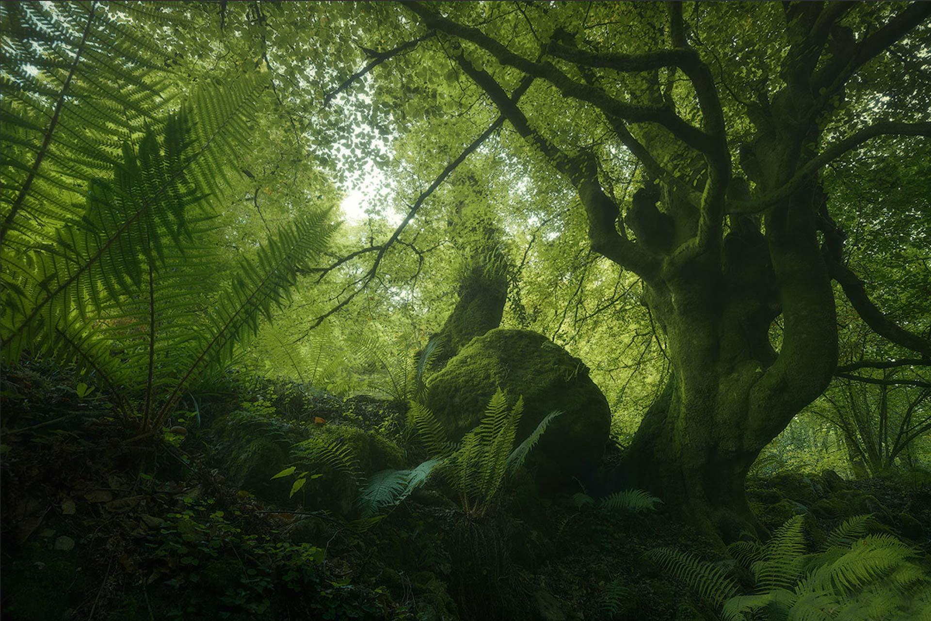 enrico fossati trees