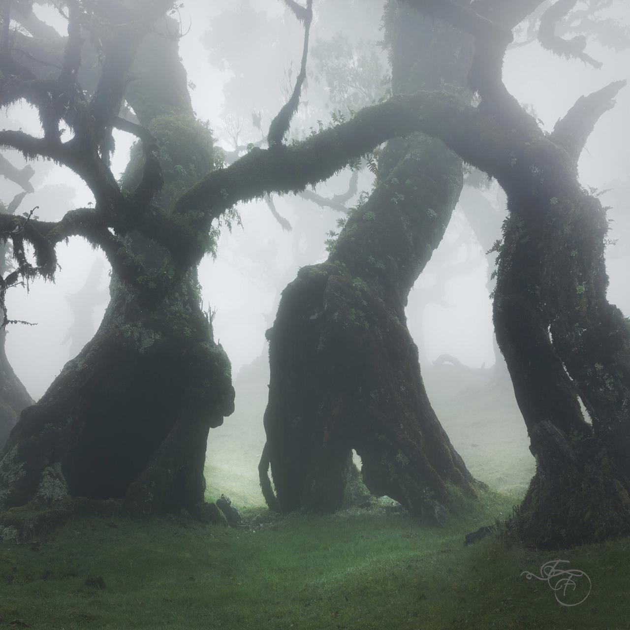 enrico-fossati-tree-photography