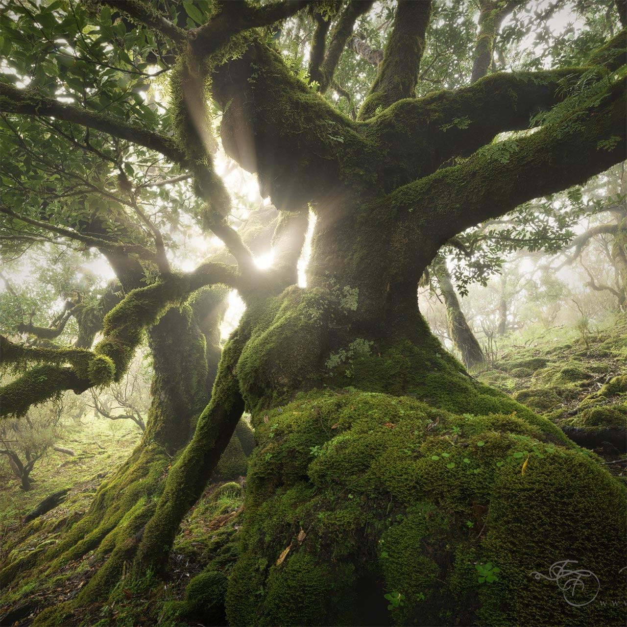 enrico fossati tree photography