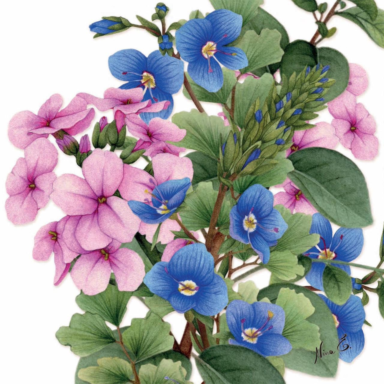 yuma floral watercolors