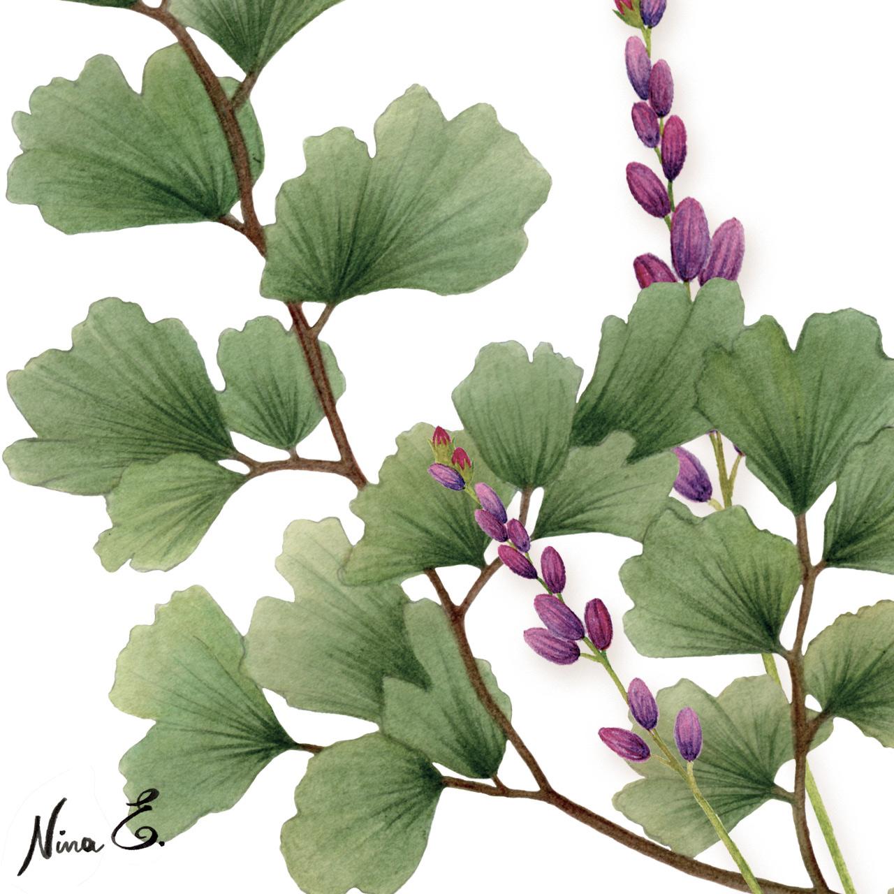 Yume floral watercolors