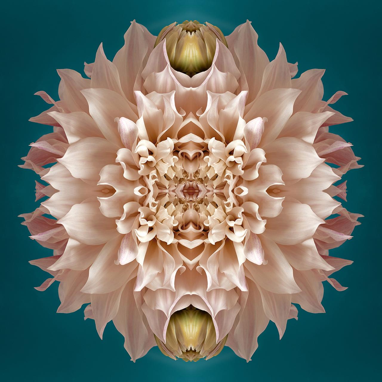 erin derby floral photographer