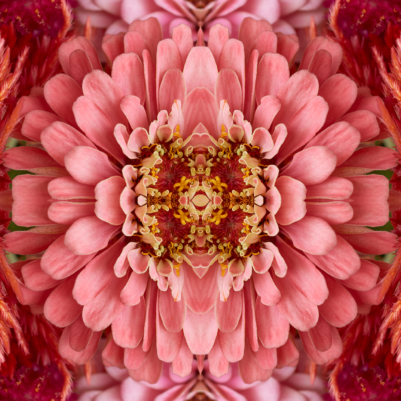 erin derby florals