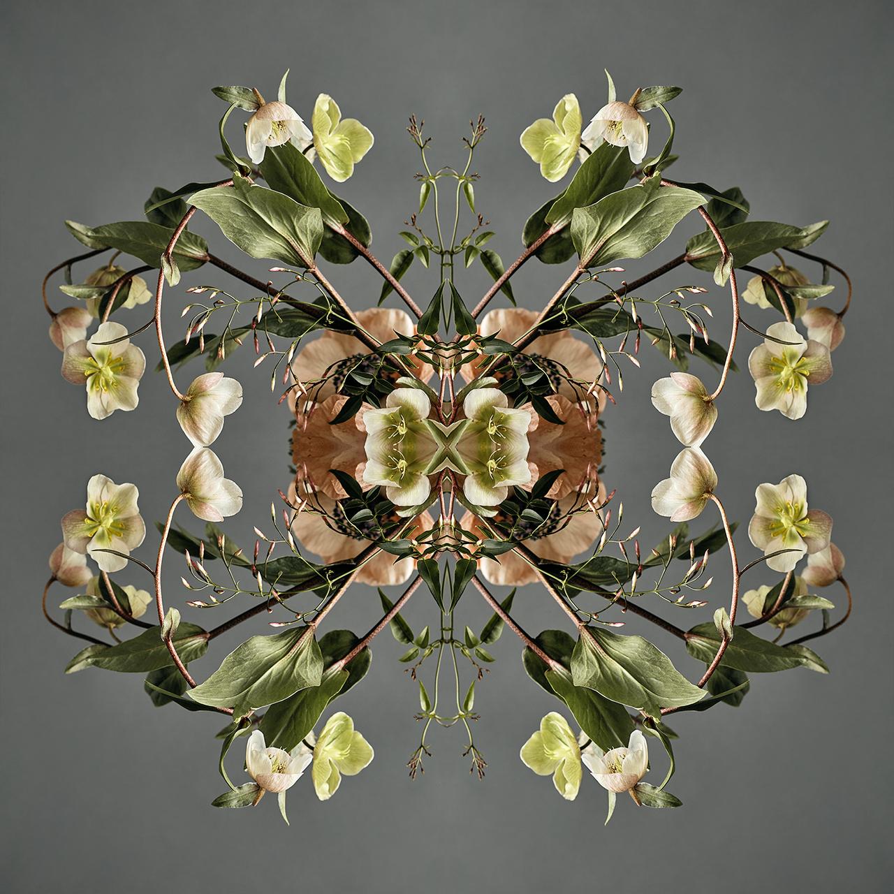 erin derby botanical photographer