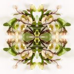 erin derby floral photography