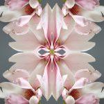 erin derby floral white lilies