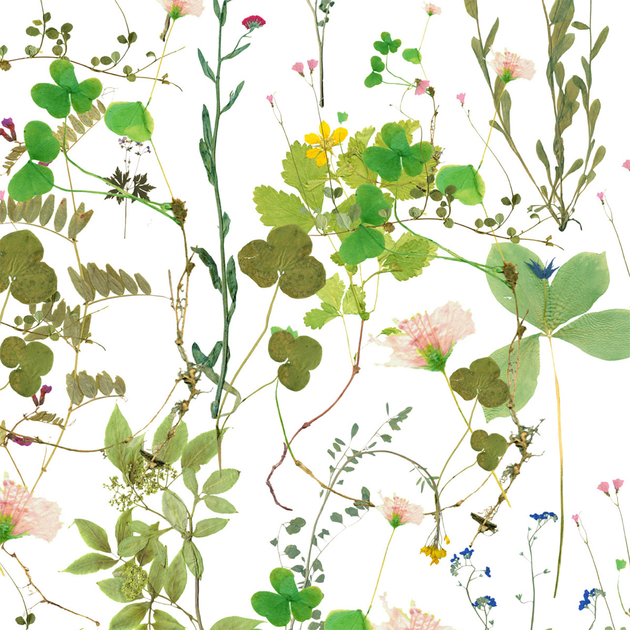 ivana-helsinki-herbarium