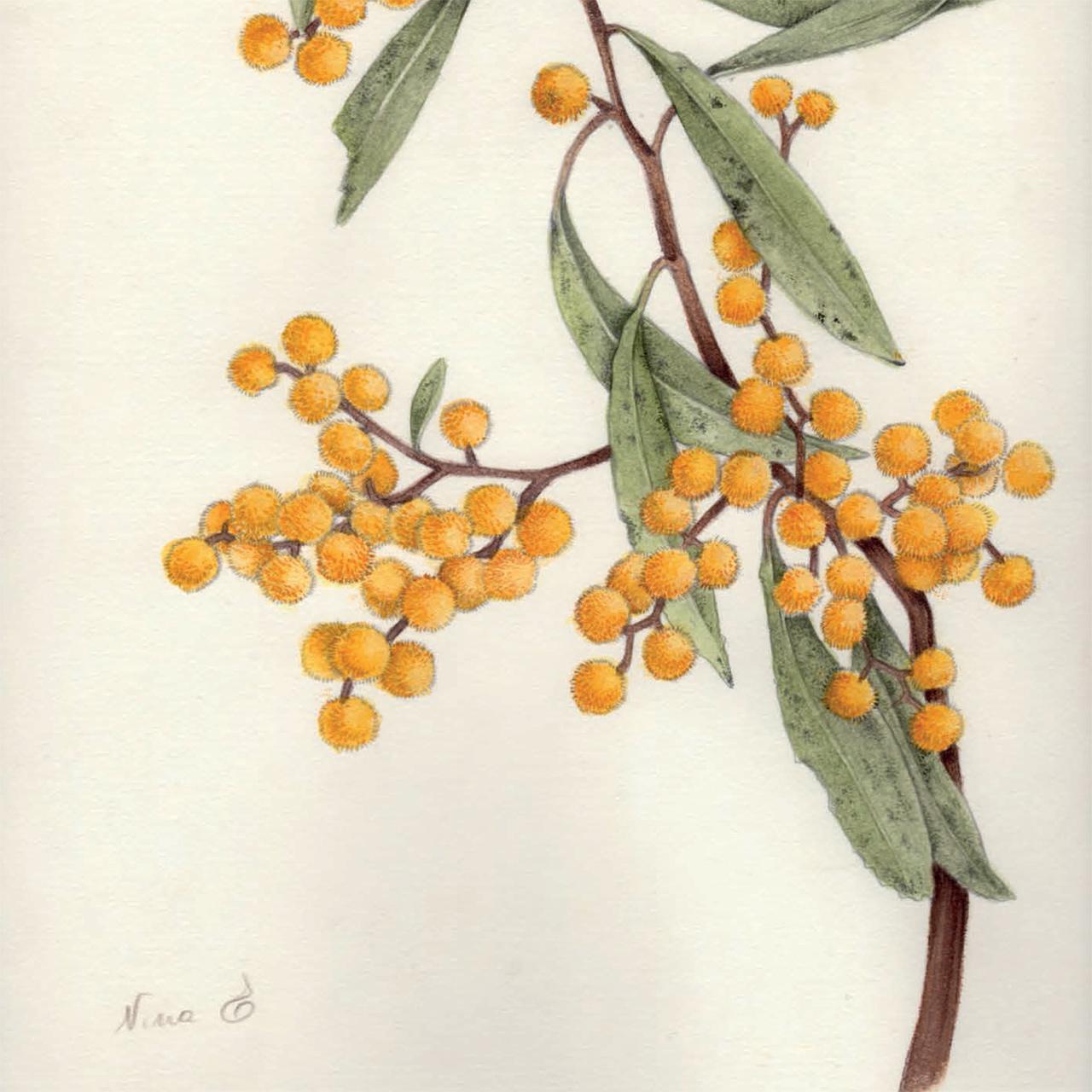 yume botanicals